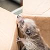 5 2 18 Peabody animal rescue 5