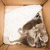 5 2 18 Peabody animal rescue