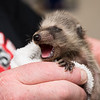 5 2 18 Peabody animal rescue 4