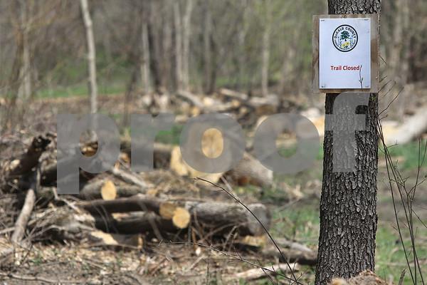 dc.050x18.ForestPreserveTrees04