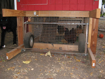 16_chicken_coop_finished