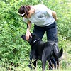 """Virgina """"Barnee"""" Shultz gets Jetta, a working search and recovery k9 who specializes in human remains ready to sniff out the  to the location of human decomposition during a training session. (Kristi Garabrandt/The News-Herald)"""