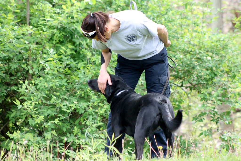 """. Virgina \""""Barnee\"""" Shultz gets Jetta, a working search and recovery k9 who specializes in human remains ready to sniff out the  to the location of human decomposition during a training session.� (Kristi Garabrandt/The News-Herald)"""