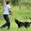 """Jetta, a working search and recovery K-9 who specializes in human remains is rewarded by playtime after alerting her handler Virginia """"Barnee"""" Shultz to the location of human decomposition during a training session. (Kristi Garabrandt/The News-Herald)"""