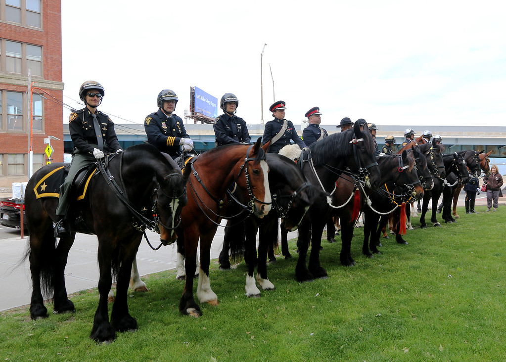 . Jonathan Tressler � The News-Herald <br> A portion of the 32nd Annual Greater Cleveland Peace Officers Memorial Parade and Memorial Service\'s equine contingent stands posted on the west end of Cleveland\'s Huntington Park May 19.