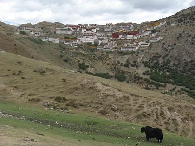 039_tibet_ganden_monastery_yak