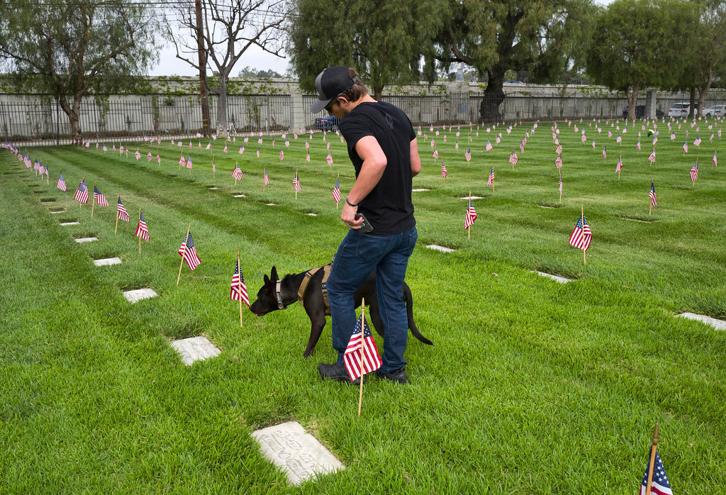 . Afghanistan war veteran John King walks through Los Angeles National Cemetery with Recon, his law enforcement service dog, on Memorial Day, Monday, May 28, 2018. They were looking for the gravesite of one of Recon\'s ancestors, a service animal named Blackout who is believed to be one of only two war dog heroes buried at the cemetery. (AP Photo/Richard Vogel)