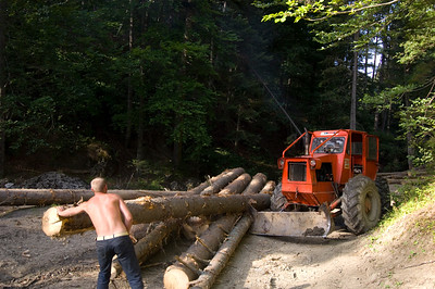 Logging in Rarau Massif, Moldavia, Romania