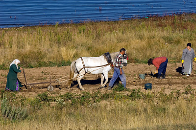 Farmers working on the field by Dospat Lake, Dospat, Bulgaria