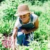 01940 Summer20 gardener 6