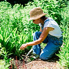 01940 Summer20 gardener 7