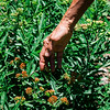 01940 Summer20 gardener 3