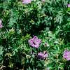 01940 Summer20 gardener 5
