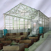 Lynn062018-Owen-New green house05