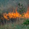 6 3 20 Lynn Frogs Pond brushfire 9