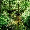 01940 Summer21 Beaver Dam Brook reservation Erin Hohmann 9