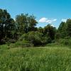 01940 Summer21 Beaver Dam Brook reservation Erin Hohmann 3