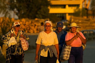 Local farmers coming back from a field, Mahmudia, The Danube Delta, Dobrogea, Romania