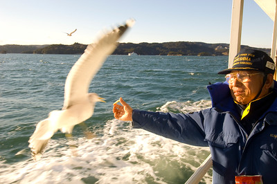 Boat trip across Matsushima Bay, feeding seagulls , Honshu Island, Japan