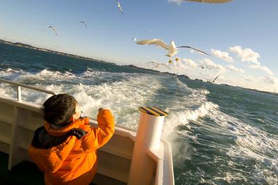 Boat trip across Matsushima Bay; feeding seagulls is great fun