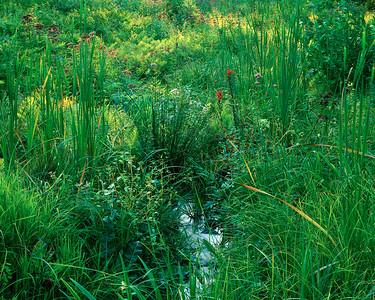 Monet's Meadow