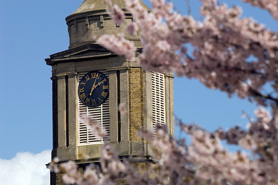 Spring blossom in Egham, United Kingdom