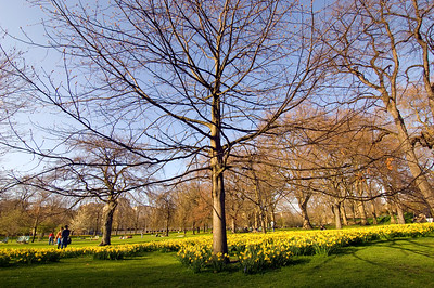 Early spring blossom in Saint James's Park, London, United Kingdom