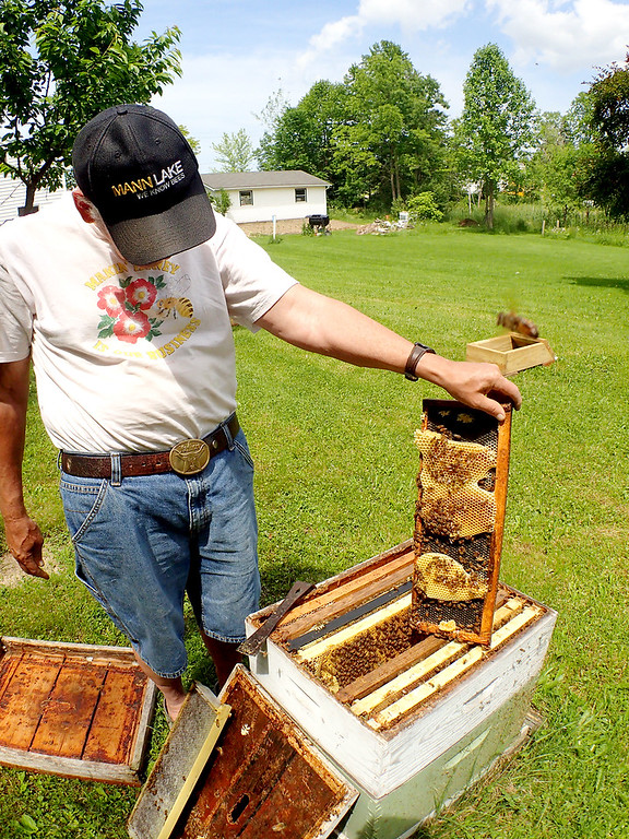 . Jonathan Tressler - The News-Herald. Hambden Township resident and longtime beekeeper Dave Paterson shows off some of the fruits of one of his hives� labor in this June 7 photo.