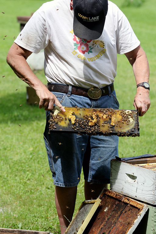 . Jonathan Tressler - The News-Herald. Dave Paterson points to various components of a beehive section at his Hambden Township property June 7.