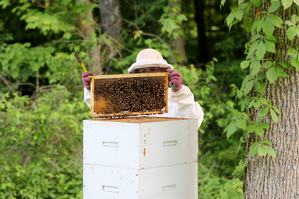 . Jonathan Tressler - The News-Herald. Brandy Arotin examines a frame from the beehive she and her husband, Robert, keep at their Montiville Township home. �It�s just kind of Zen,� Brandy said about keeping bees. �It�s a great hobby and it doesn�t take a lot of time.�