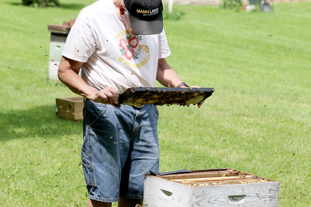 . Jonathan Tressler - The News-Herald. Beekeeper Dave Paterson pays no mind to the dozens of female worker bees buzzing all around him as he checks a frame from one of the many hives he keeps on his Hambden Township property.