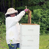 Jonathan Tressler - The News-Herald. Montville Township resident Brandy Arotin examines the beehive she keeps to help pollinate her garden and produce a little honey. Arotin and her husband, Robert, are relatively new beekeepers, having just gotten into it in the last three years.