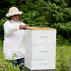 Jonathan Tressler - The News-Herald. Brandy Arotin - a relative newcomer to the world of beekeeping, having gotten into it about three years ago - prepares to check her hive of honeybees at her Montville Township home in this June 7 photo.