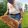 Jonathan Tressler - The News-Herald. Hambden Township beekeeper Dave Paterson on June 7 holds up an example of a beehive brood - where larvae develop into bees - from one of the several hives he keeps on his property.
