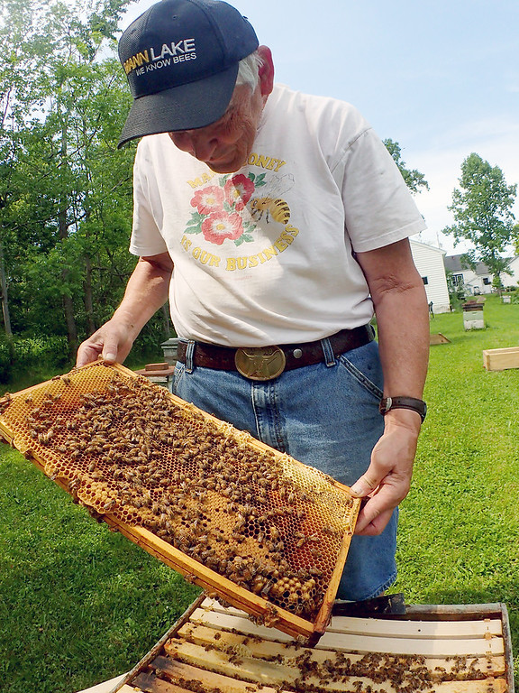 . Jonathan Tressler - The News-Herald. Hambden Township beekeeper Dave Paterson on June 7 holds up an example of a beehive brood - where larvae develop into bees - from one of the several hives he keeps on his property.