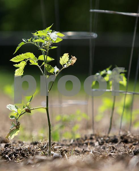 dnews_0612_Syco_Gardens_03