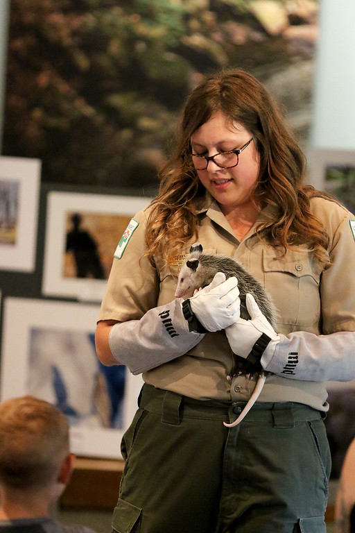 . Jonathan Tressler � The News-Herald <br> Lake Metroparks Wildlife Education Specialist Kirsten Bull introduces Capt. John Smith the opposum June 23 during a live animal presentation inside the nature center at Penitentiary Glen in Kirtland. The program was part of the Great AMerican Backyard Campout event the park system hosted June 22-24.
