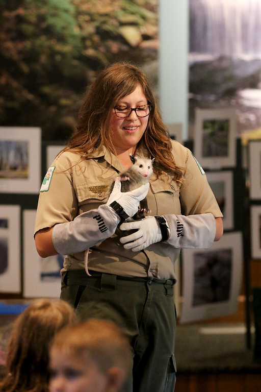 . Jonathan Tressler � The News-Herald <br> Wildlife Education Specialist Kirsten Bull holds Capt. John Smith - a rescued opossum -  during a live animal presentation June 23 at Penitentiary Glen, host to the Lake Metroparks� June 22-24 Great American Campout event.