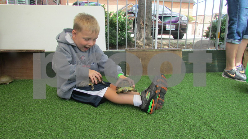 "Aimee Barrows – for Shaw Media<br /> James Caporali, 5, of Cortland, plays with turtles during the annual ""Rockin' for the Reptiles"" fundraiser in downtown Sycamore."