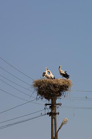 Europe, Romania, The Danube Delta, Murighiol village