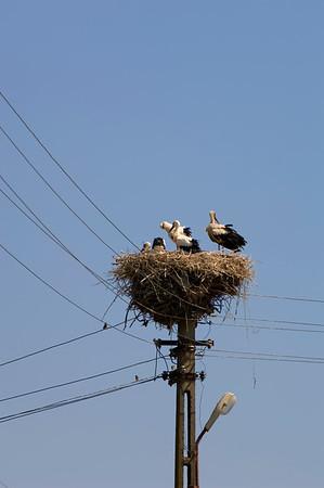 Europe, Romania, The Danube Delta, Murighiol village, stork nest