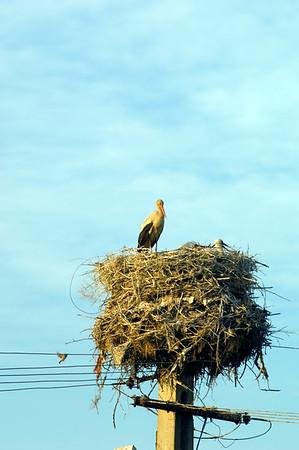Europe, Romania, The Dobrogea, Istria village , stork nest
