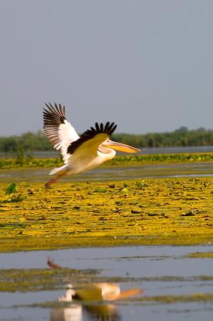 Europe, Romania, The Danube Delta, Lake Uzlina