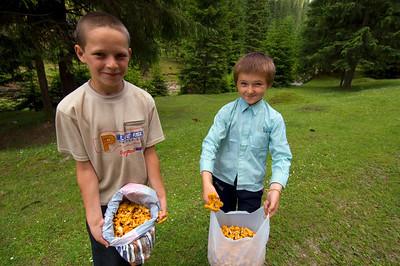 Europe, Romania, Moldavia ,Bucovina, local boys pick mushrooms to sell