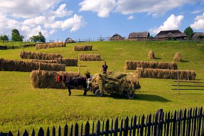 Europe, Romania, Moldavia ,Bucovina, hay-making, hay harvest