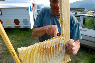 Europe, Romania, Moldavia ,Bucovina, bee-keeping is popular in Romania, bee-keeper is cutting out a sweet snack