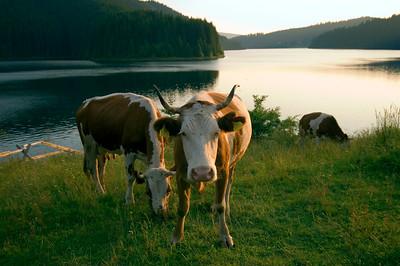 Europe, Romania, Transylvania, The Apuseni Mountains, Lake Fantanele