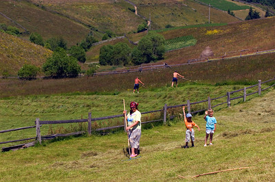 Europe, Romania, Transylvania, The Apuseni Mountains, haymaking, hay harvest in Marisel village