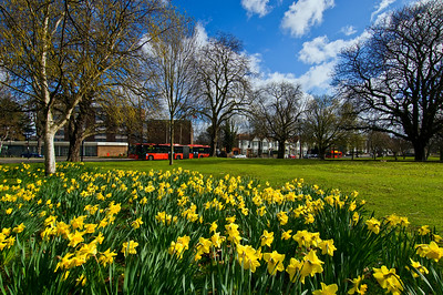 Early spring in Ealing