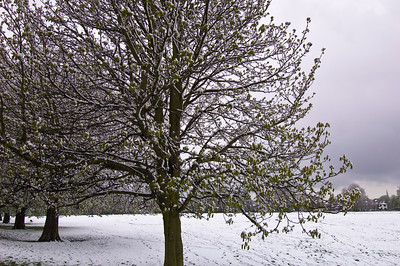 Snow in early spring covering Ealing Common, W5, London, United Kingdom